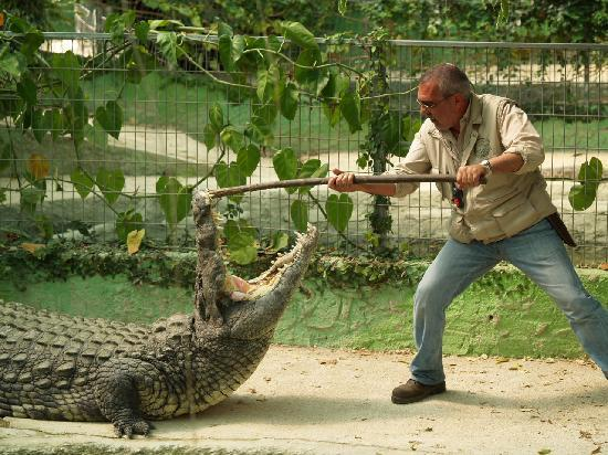 Photo of Nature Preserve Crocodile Park at C/ Cuba, 14, Torremolinos, Spain