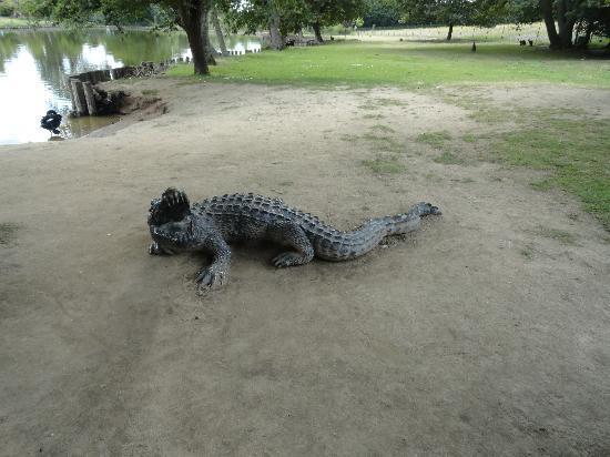 Le Jardin des Kangourous : crocrodile très réaliste...