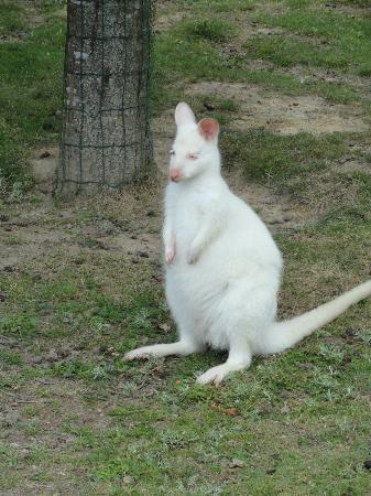 Le Jardin des Kangourous : Blanc comme neige