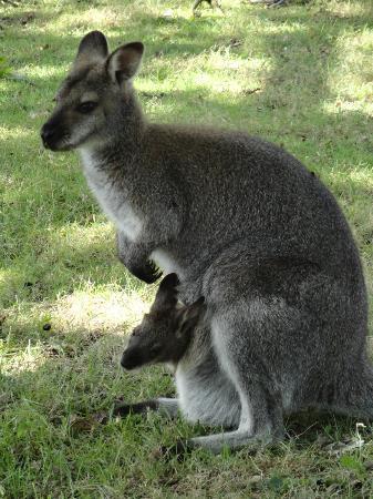 90e57e10b8c5 Une maman et son bébé - Photo de Le Jardin des Kangourous, La ...