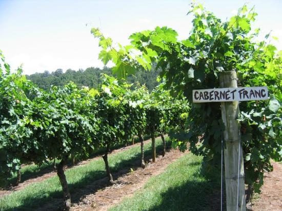 Young Harris, GA: Cabernet Franc vines