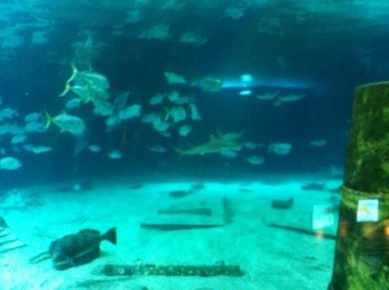 Lots Of Sharks Here Picture Of Adventure Aquarium
