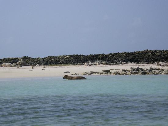 Baby Beach: Reef