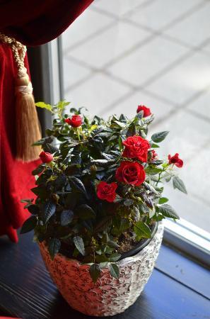 Le Rouge - brasserie & cafe: Le Rouge