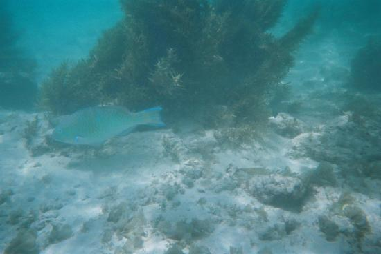 Cerf Island Resort: Snorkeling