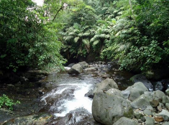 هوتل إلتوكانو ريزورت آند ثيرمال سبا: river/rio 