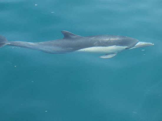 Dana Point, Kalifornia: A Dolphin beside the boat