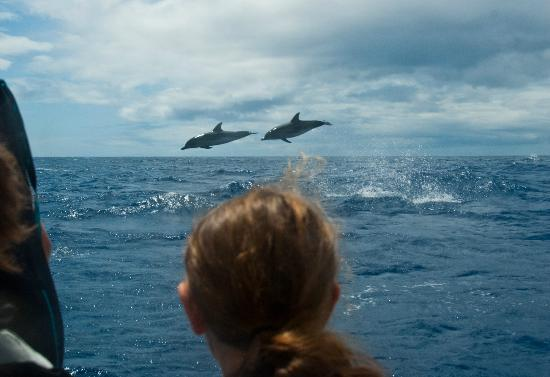 Lajes do Pico, Portugal: Jumping Dolphins