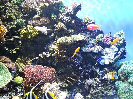 Jellies Picture Of Monterey Bay Aquarium Monterey