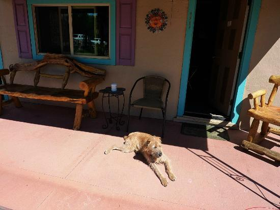 Pinon Court Cabins: Sunny Enjoying the Porch of Our Cabin...