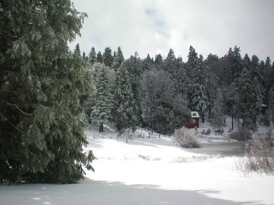 Bailey's Palomar Resort : Bailey Meadow with pond in the snow