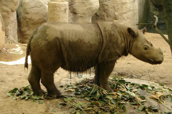 Cincinnati Zoo Picture Of Cincinnati Zoo Botanical Garden Cincinnati Tripadvisor