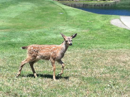 Salmon Run Golf Course: Oh deer