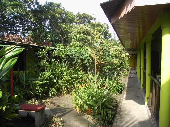 Cabinas El Icaco Tortuguero: Garden