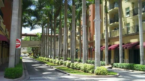 Coral Gables, FL: Lines of Palms in Merrick Park