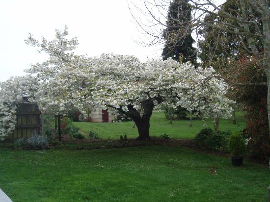 Glencoe Rural Retreat: garden splendeur in spring