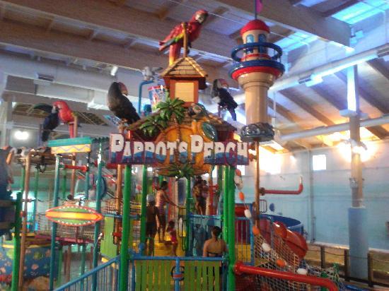 Mount Laurel, NJ: Parrot Perch