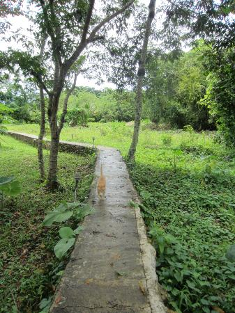 Cotton Tree Lodge: Walkway to the Jungle / Garden (With Mr.Miss, the lodge cat)