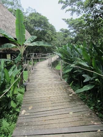 Cotton Tree Lodge: Grounds Walkway