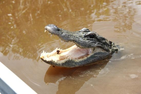 Capt Mitch's - Everglades Private Airboat Tours: Lunch time in the Everglades!