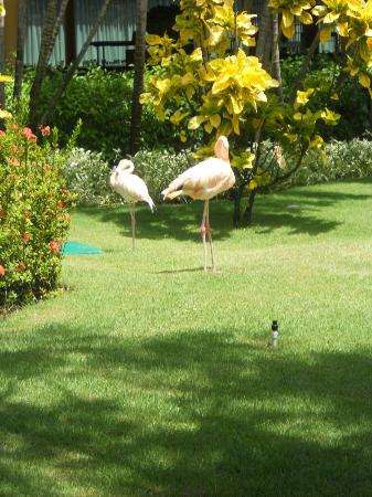 flamingos nos jardins photo de iberostar punta cana bavaro tripadvisor. Black Bedroom Furniture Sets. Home Design Ideas
