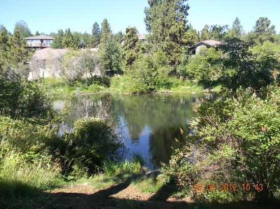 Shilo Inn Suites Hotel - Bend: This is the view of the river from our room.