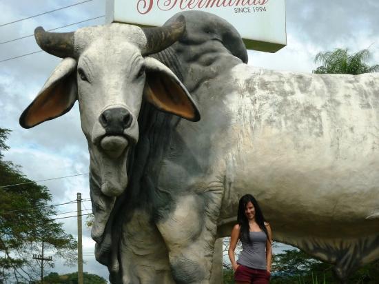 Restaurante BBQ Tres Hermanas: Toro