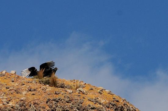 Los Terrones: Aves que se pueden avistar