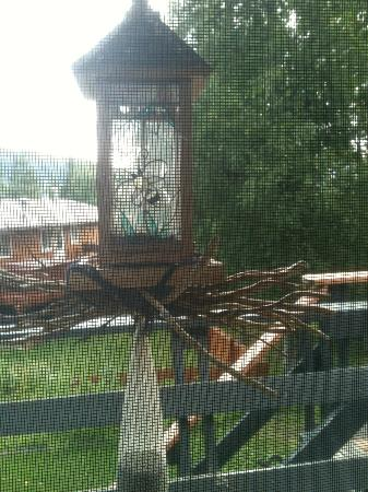 Alaska Chalet Bed & Breakfast: We watched lots of birds on this feeder from the Rise and Shine Suite