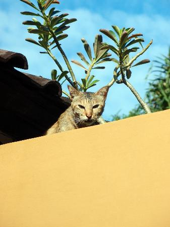 ดยานาวิลลา: Mr Meowy cat that hangs out near the villas
