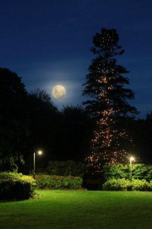 Waldorf Leura Gardens Resort: Our gardens at night