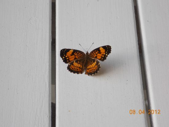 Inn at Monticello: A butterfly visit while having some coffee on the porch