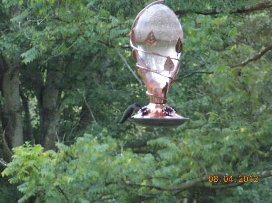 Inn at Monticello : saw the hummingbird through the living room window