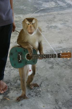 "Samui Monkey Theatre: Monkey ""playing guitar"""