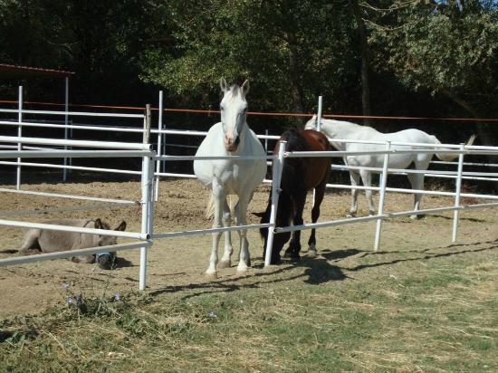 Agriturismo Fattoria Il Bruco: i cavalli