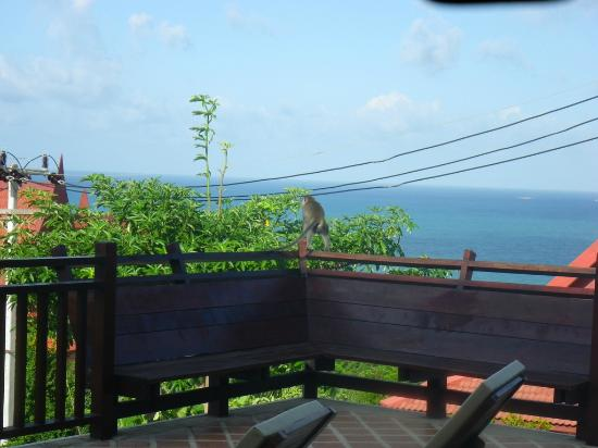 Baan KanTiang See Villa Resort (2 bedroom villas): One of the monkeys that appear around the resort on our balcony