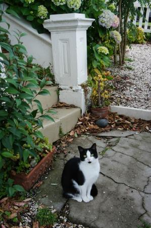 Sunderland House: Cat in the neighbourhood