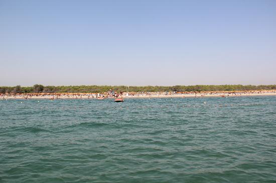 Torreserena Village: Vista della spiaggia e della rete anti medusa