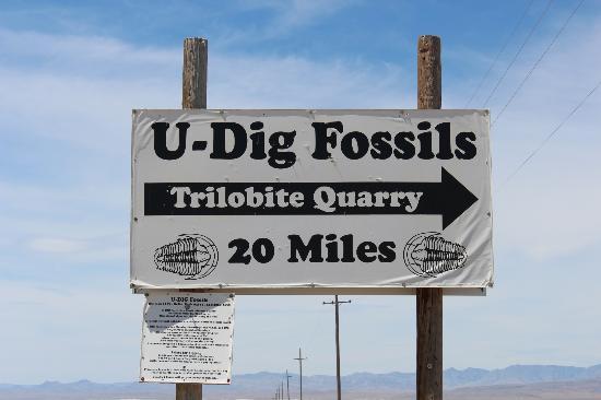U-Dig Fossils照片