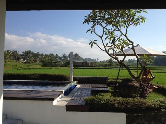 The Samara: pool in the middle of the rice fields