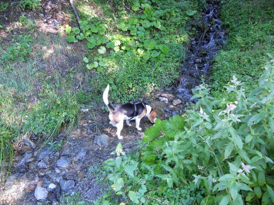 Bergbauernhof Irxner: Paradies für Hunde