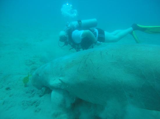 Hurghada, Egypt: 2 see the size ,me 185 cm