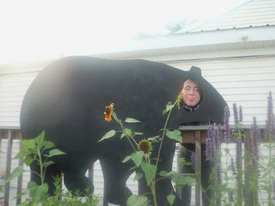 Black Bear Cafe: Black Bear