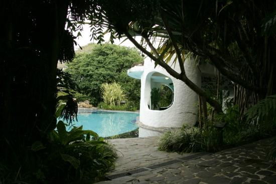 Finca Rosa Blanca Coffee Plantation Resort: Pool area