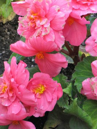 Cascade Gardens: Lots of beautiful flowers