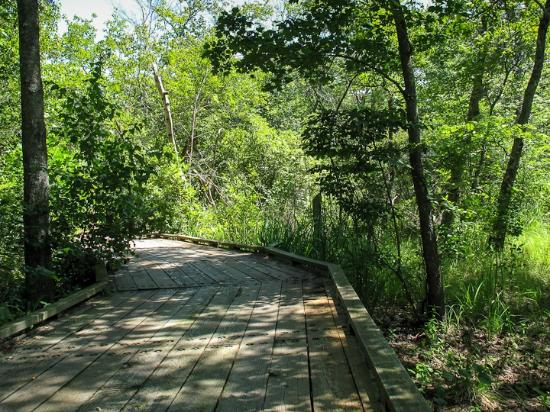 Boardwalk along the Dune Trail; cool in the summer...Crane Beach