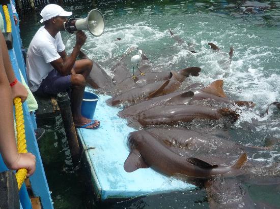Decameron Cartagena: Show tiburón gato en Isla del Rosario Cartagena