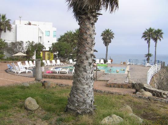 Las Rocas Resort & Spa: palms
