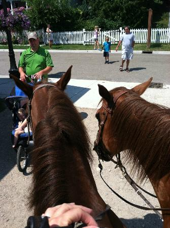 Cindy's Riding Stable Market Street: Yogi on the left, Charlie on the right- these two were inseperable