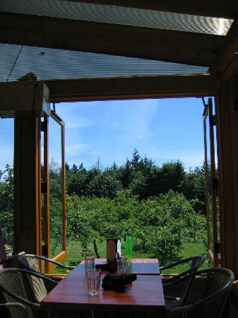 Merridale Cidery & Distillery: View from terrace table